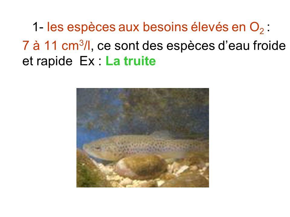 1- les espèces aux besoins élevés en O 2 : 7 à 11 cm 3 /l, ce sont des espèces deau froide et rapide Ex : La truite
