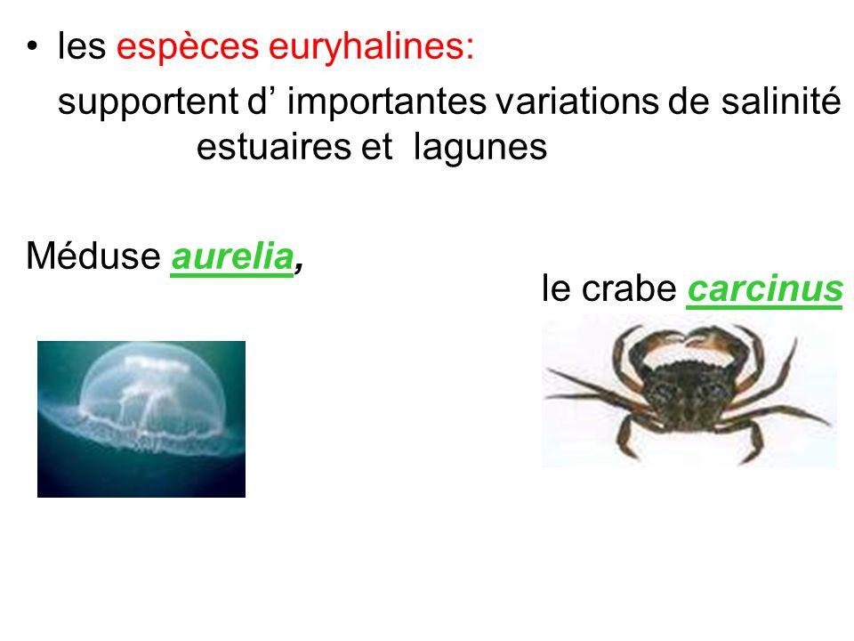 les espèces euryhalines: supportent d importantes variations de salinité estuaires et lagunes Méduse aurelia, le crabe carcinus