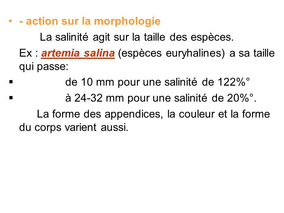 - action sur la morphologie La salinité agit sur la taille des espèces. Ex : artemia salina (espèces euryhalines) a sa taille qui passe: de 10 mm pour