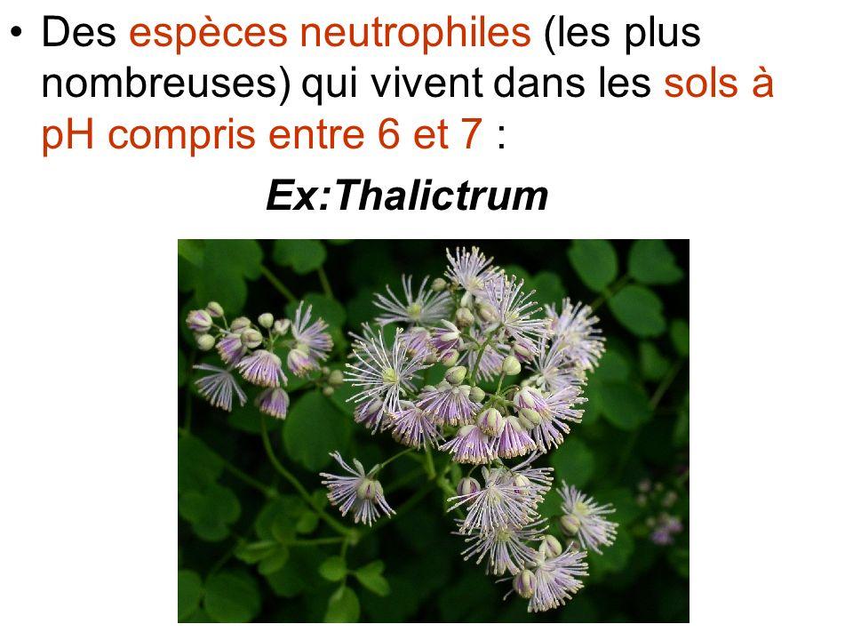 Des espèces neutrophiles (les plus nombreuses) qui vivent dans les sols à pH compris entre 6 et 7 : Ex:Thalictrum
