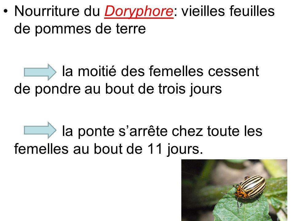 Nourriture du Doryphore: vieilles feuilles de pommes de terre la moitié des femelles cessent de pondre au bout de trois jours la ponte sarrête chez to