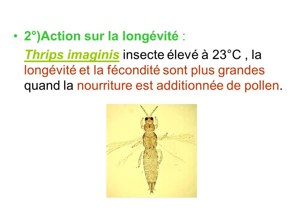 2°)Action sur la longévité : Thrips imaginis insecte élevé à 23°C, la longévité et la fécondité sont plus grandes quand la nourriture est additionnée