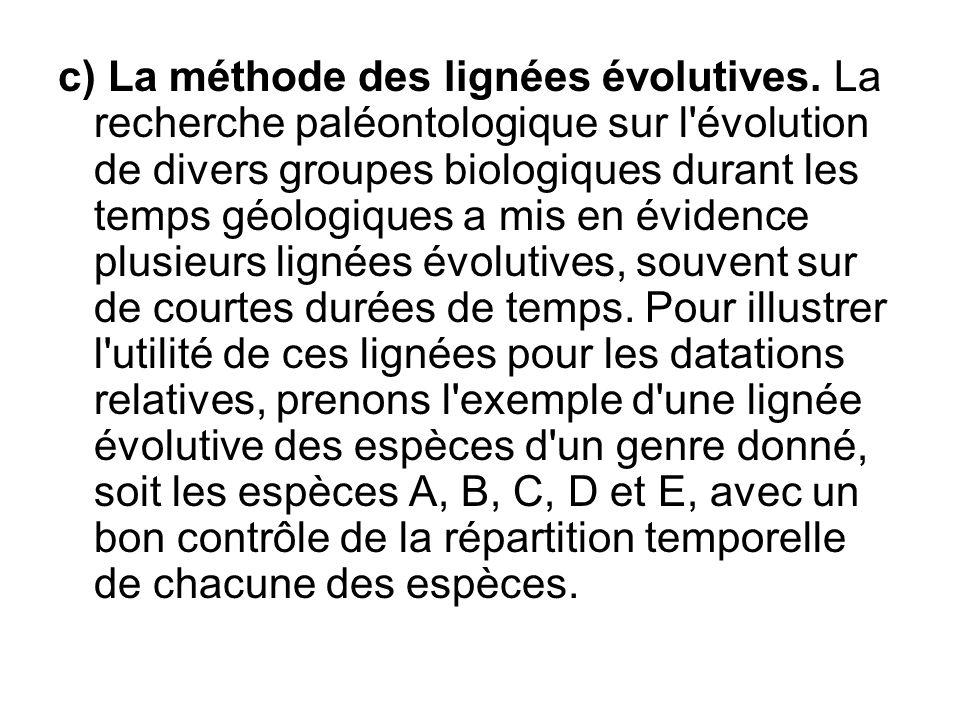 c) La méthode des lignées évolutives. La recherche paléontologique sur l'évolution de divers groupes biologiques durant les temps géologiques a mis en