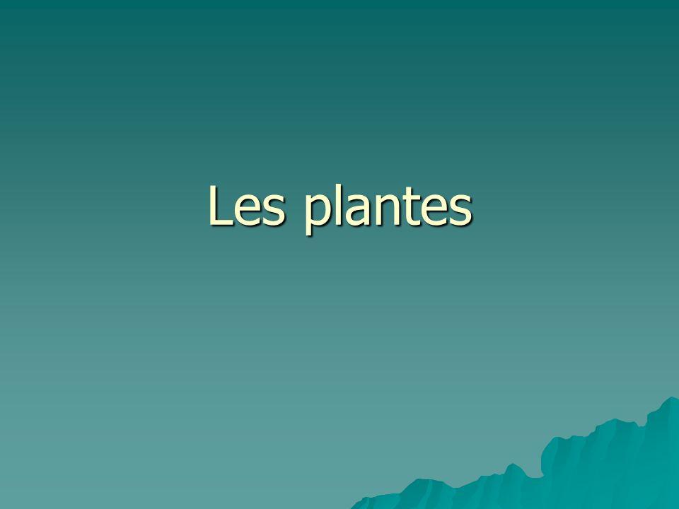 Systèmes organiques des plantes Chez les plantes il y a deux systèmes organiques: Chez les plantes il y a deux systèmes organiques: –Le système radiculaire –Le système foliacé