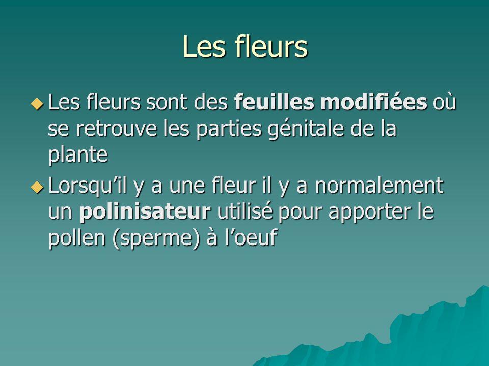 Les fleurs Les fleurs sont des feuilles modifiées où se retrouve les parties génitale de la plante Les fleurs sont des feuilles modifiées où se retrou