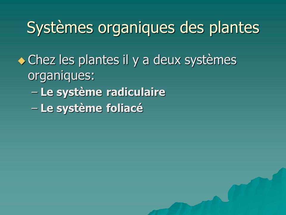 Systèmes organiques des plantes Chez les plantes il y a deux systèmes organiques: Chez les plantes il y a deux systèmes organiques: –Le système radicu