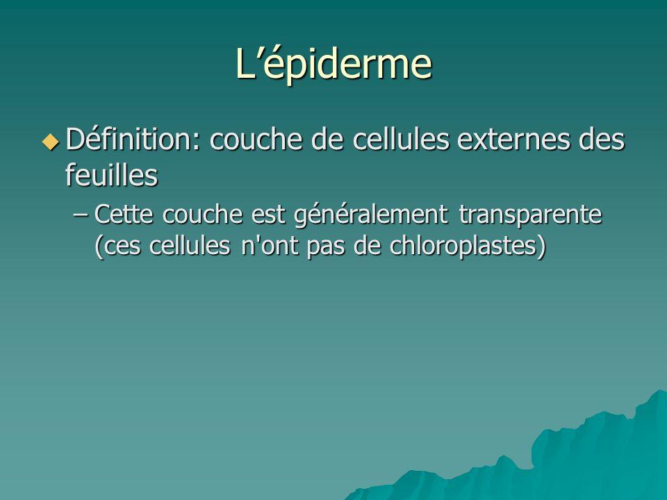 Cellules palissadiques Définition: cellules remplies de chloroplaste Définition: cellules remplies de chloroplaste lieu où se produit la majorité de la photosynthèse lieu où se produit la majorité de la photosynthèse