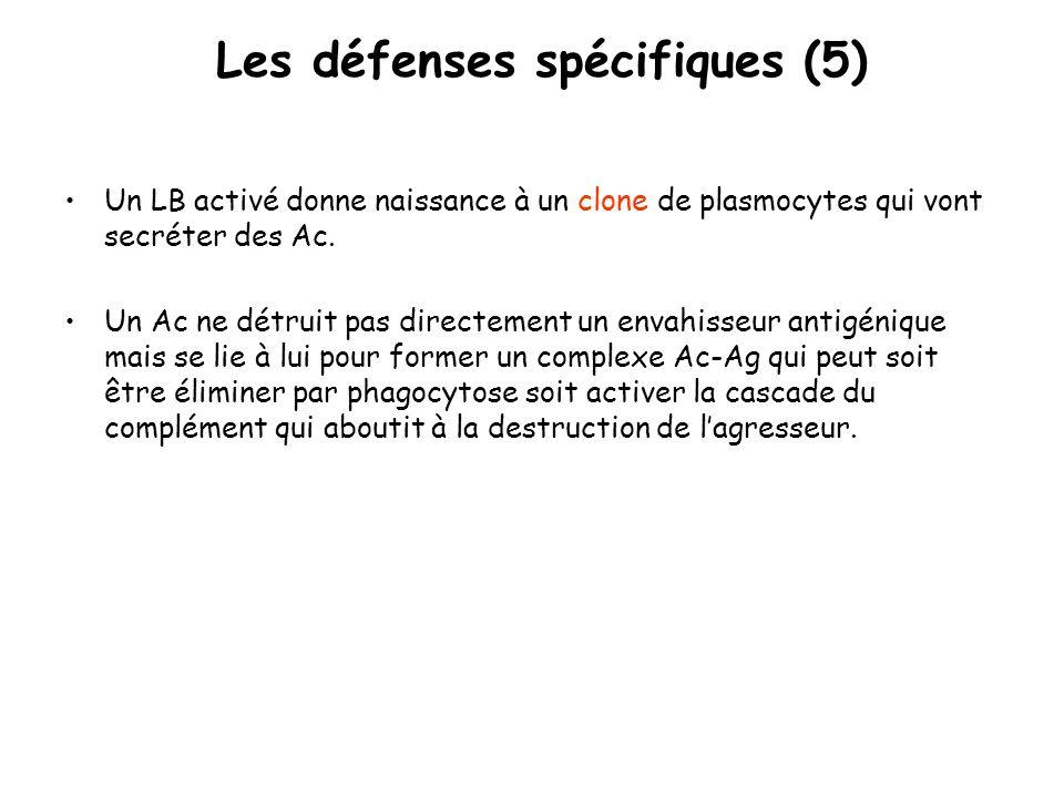 Les défenses spécifiques (5) Un LB activé donne naissance à un clone de plasmocytes qui vont secréter des Ac. Un Ac ne détruit pas directement un enva