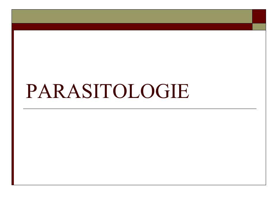 Métazoaires Vers parasites Ronds ou segmentés Dimorphisme sexuel Œufs dans les selles