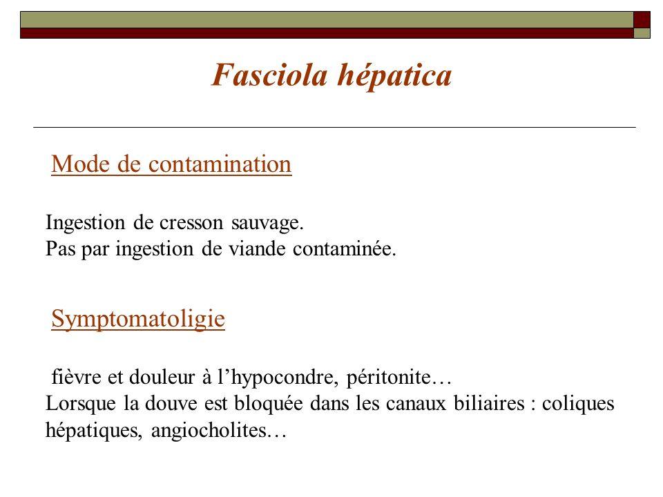 Fasciola hépatica Mode de contamination Ingestion de cresson sauvage. Pas par ingestion de viande contaminée. Symptomatoligie fièvre et douleur à lhyp