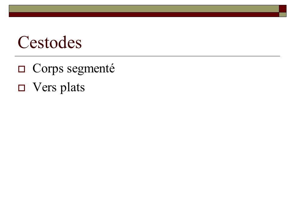 Cestodes Corps segmenté Vers plats