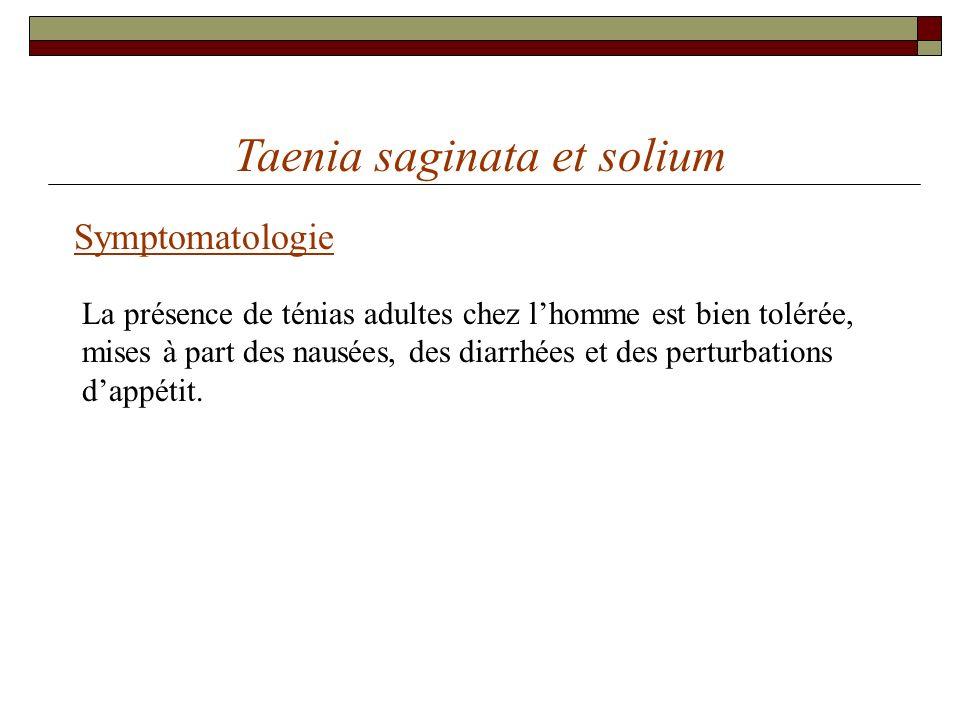 Taenia saginata et solium Symptomatologie La présence de ténias adultes chez lhomme est bien tolérée, mises à part des nausées, des diarrhées et des p