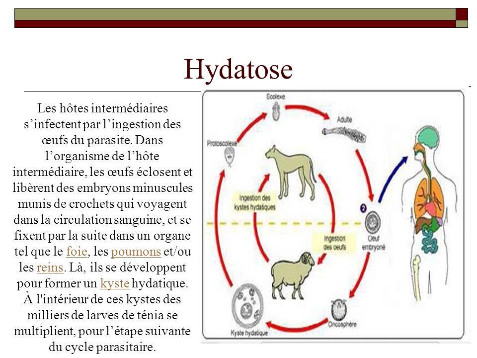 Hydatose Les hôtes intermédiaires sinfectent par lingestion des œufs du parasite. Dans lorganisme de lhôte intermédiaire, les œufs éclosent et libèren