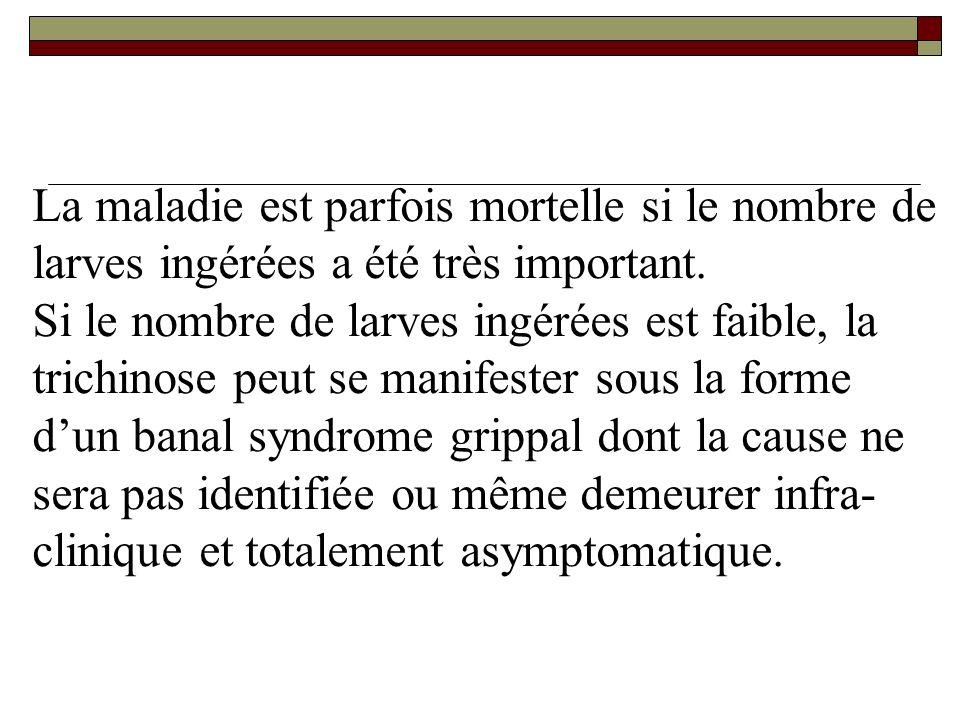 La maladie est parfois mortelle si le nombre de larves ingérées a été très important. Si le nombre de larves ingérées est faible, la trichinose peut s