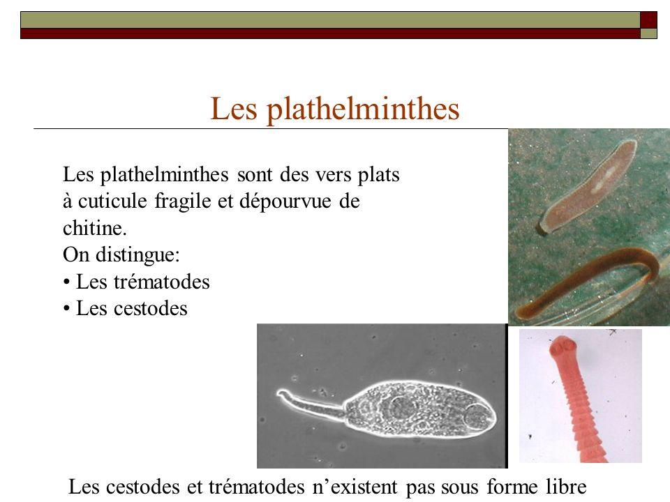 Eléphnthiasis