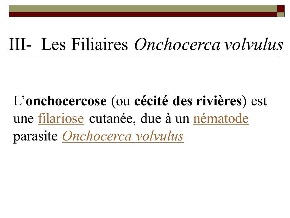 Lonchocercose (ou cécité des rivières) est une filariose cutanée, due à un nématode parasite Onchocerca volvulusfilariosenématodeOnchocerca volvulus I