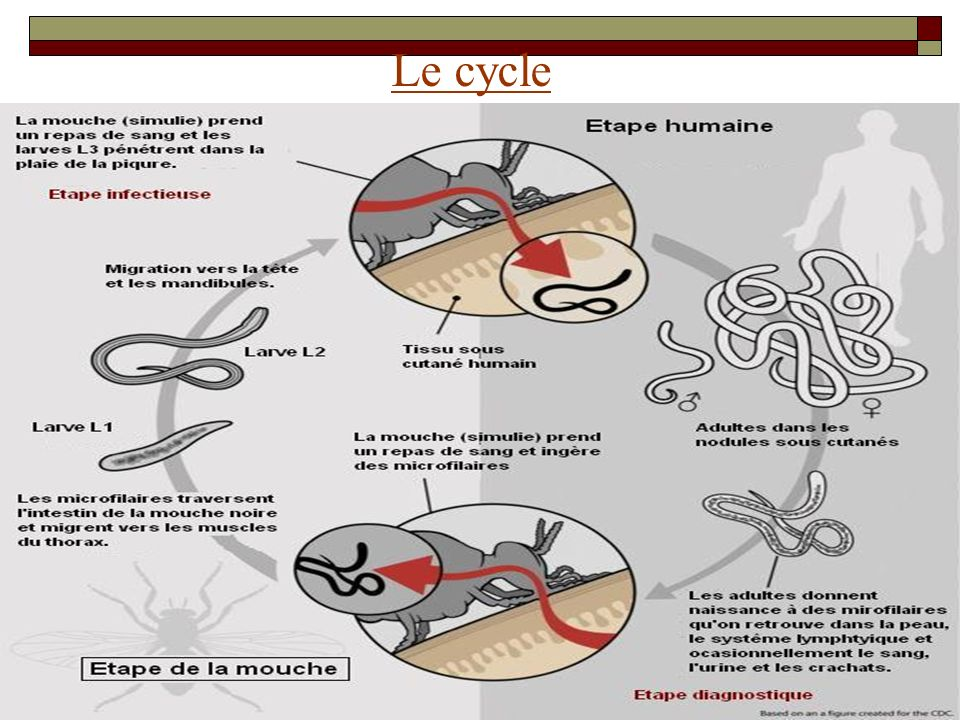 Le cycle