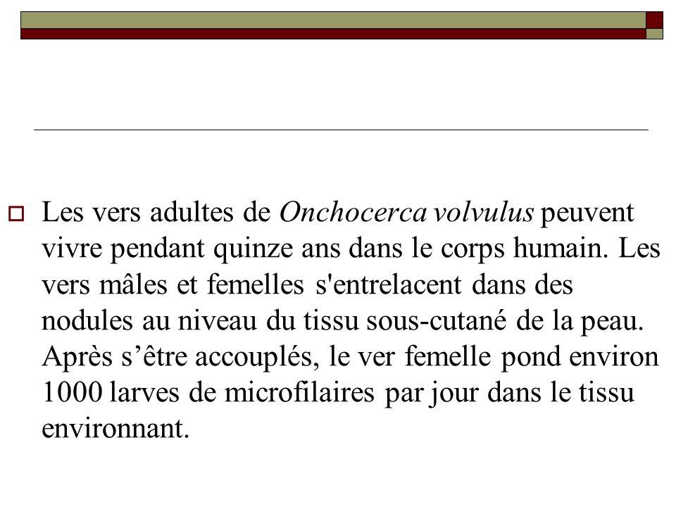 Les vers adultes de Onchocerca volvulus peuvent vivre pendant quinze ans dans le corps humain. Les vers mâles et femelles s'entrelacent dans des nodul