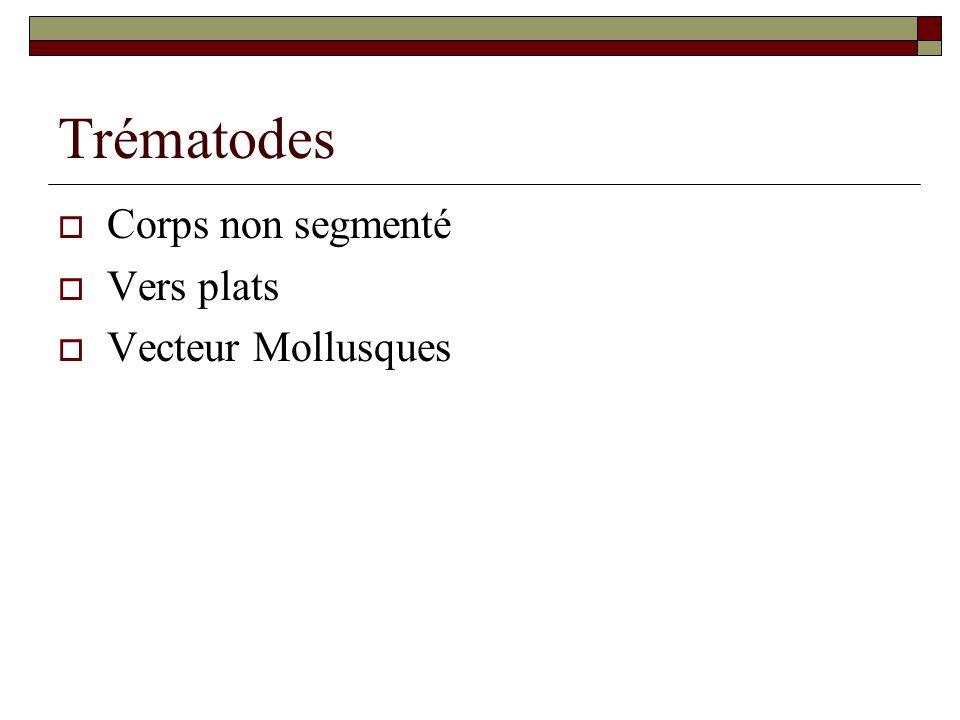 Fasciola hépatica Vers foliacé brunâtre Taille : 15 à 30 mm de long Hermaphrodite Durée de vie : 10 ans Œufs mesurent de 130 à 150 µm sur 60 à 90 µm.