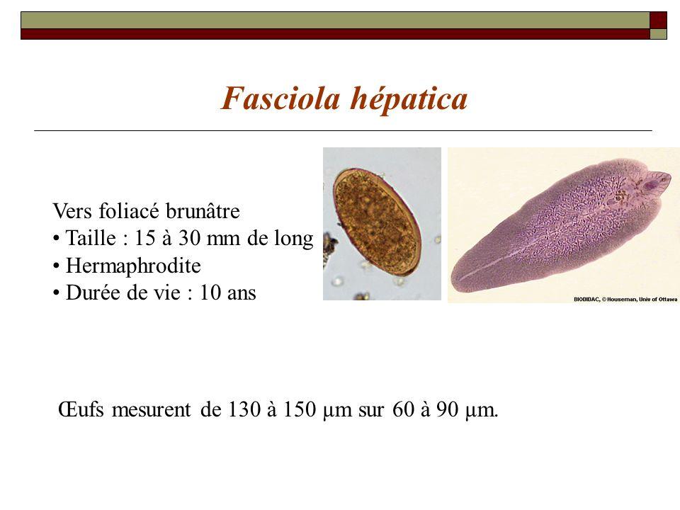 Fasciola Douve du foie Lhumain est un hôte accidentel P: 27