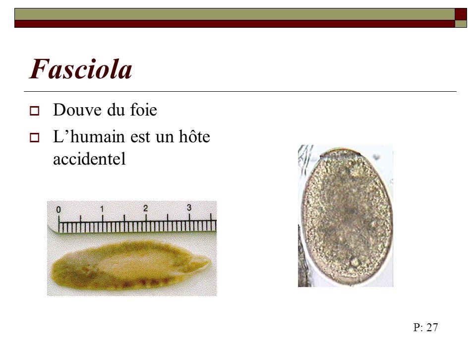Trichinella Il existe 5 espèces de Trichinella: spiralis britoni nelsoni nativa pseudospiralis