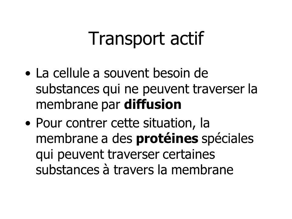 Transport actif La cellule a souvent besoin de substances qui ne peuvent traverser la membrane par diffusion Pour contrer cette situation, la membrane