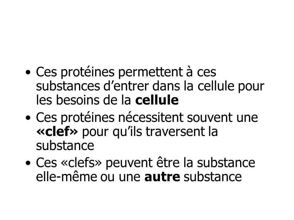 Ces protéines permettent à ces substances dentrer dans la cellule pour les besoins de la cellule Ces protéines nécessitent souvent une «clef» pour qui
