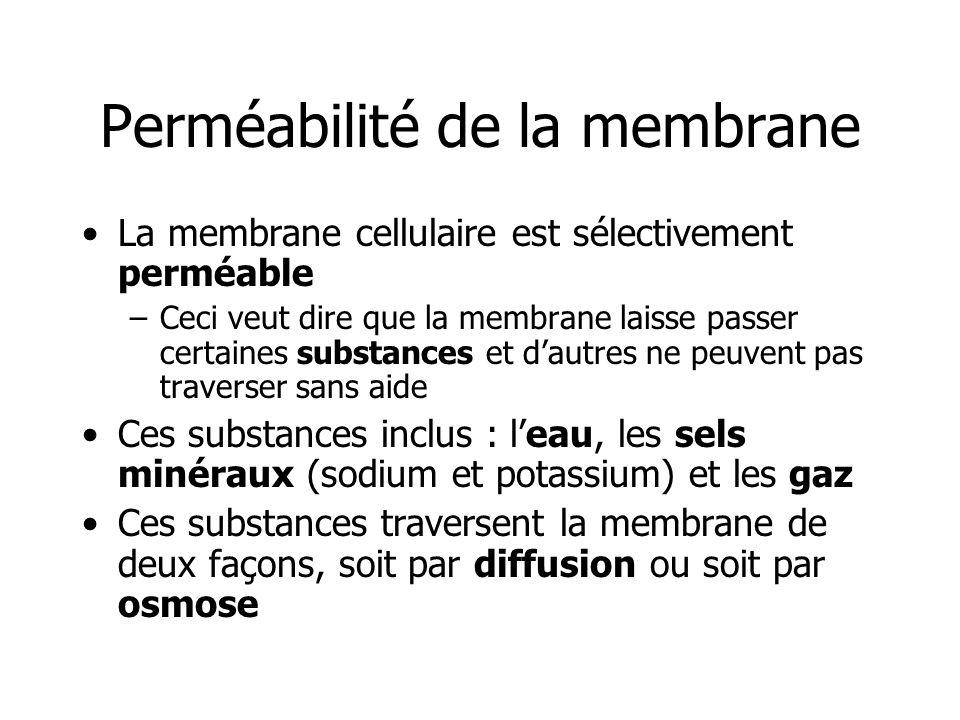 Perméabilité de la membrane La membrane cellulaire est sélectivement perméable –Ceci veut dire que la membrane laisse passer certaines substances et d