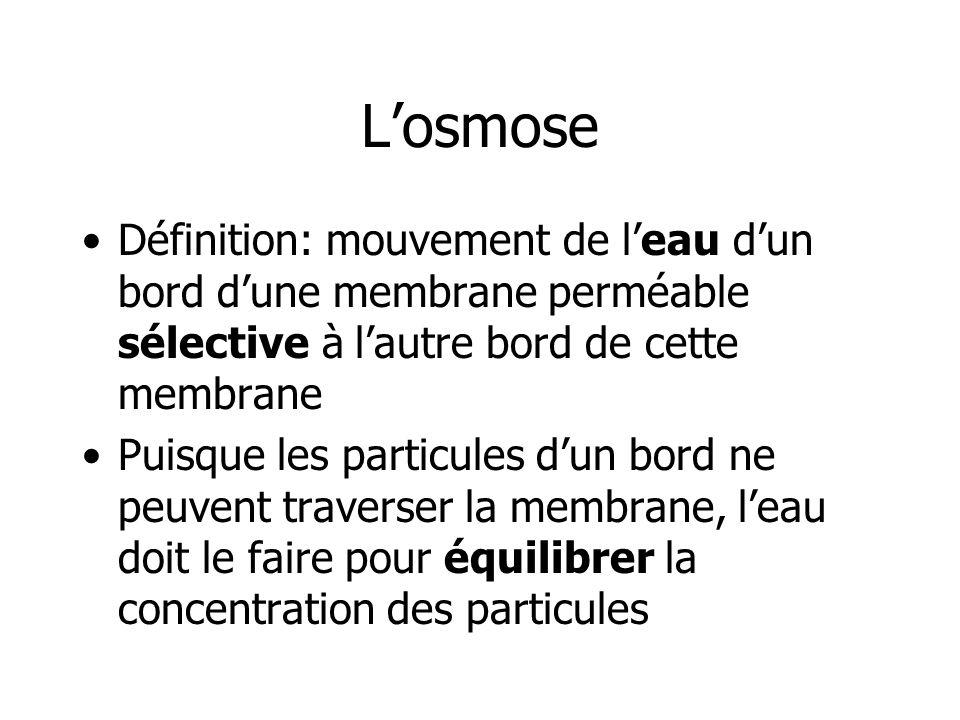 Losmose Définition: mouvement de leau dun bord dune membrane perméable sélective à lautre bord de cette membrane Puisque les particules dun bord ne pe