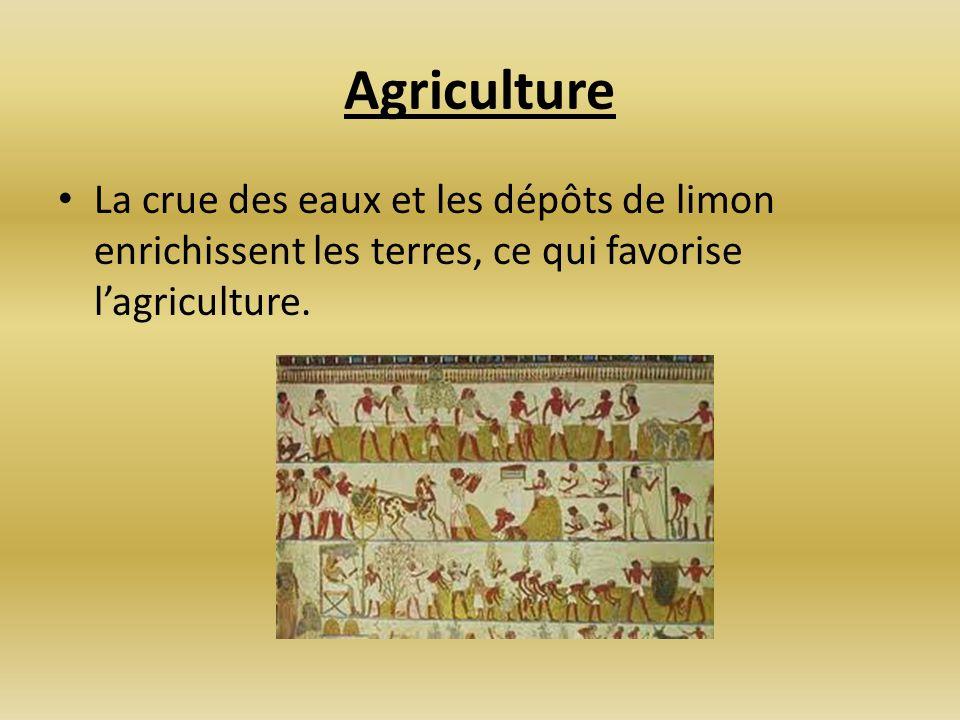 Agriculture La crue des eaux et les dépôts de limon enrichissent les terres, ce qui favorise lagriculture.
