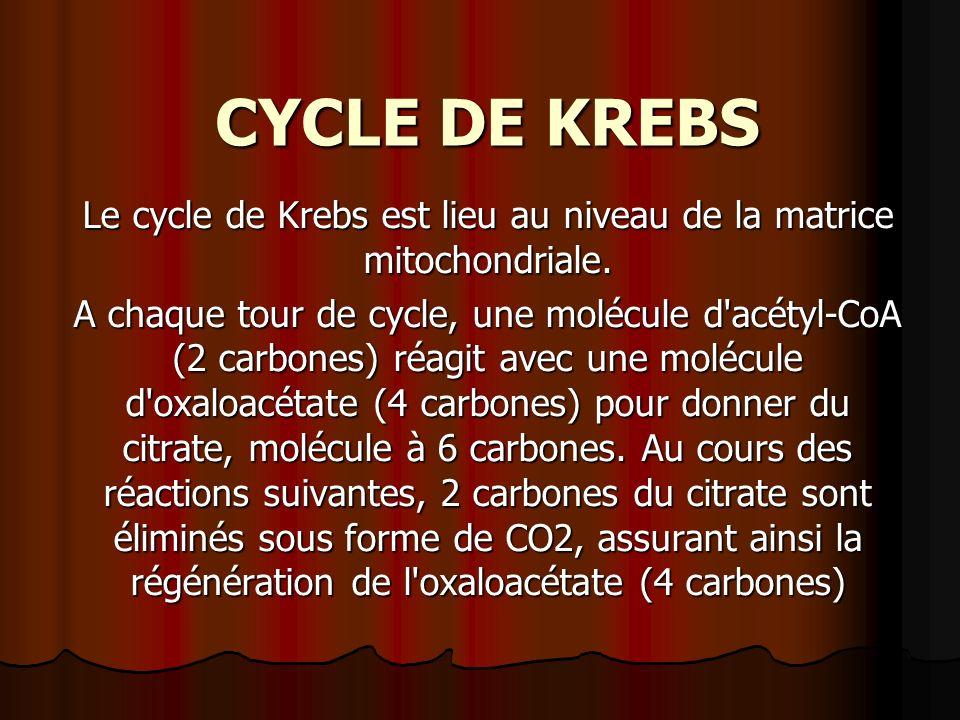CYCLE DE KREBS Le cycle de Krebs est lieu au niveau de la matrice mitochondriale. A chaque tour de cycle, une molécule d'acétyl-CoA (2 carbones) réagi