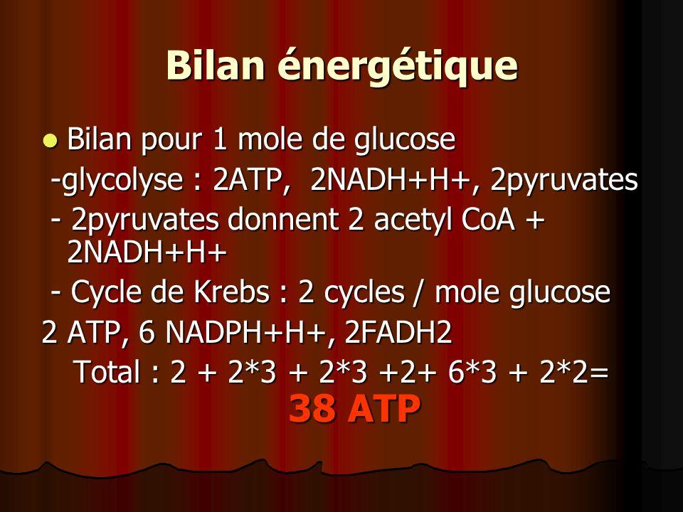 Bilan énergétique Bilan pour 1 mole de glucose Bilan pour 1 mole de glucose -glycolyse : 2ATP, 2NADH+H+, 2pyruvates -glycolyse : 2ATP, 2NADH+H+, 2pyru