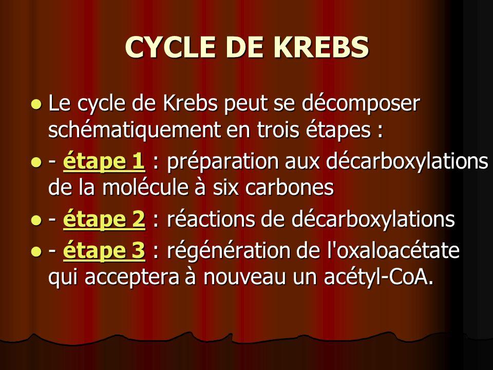 CYCLE DE KREBS Le cycle de Krebs peut se décomposer schématiquement en trois étapes : Le cycle de Krebs peut se décomposer schématiquement en trois ét