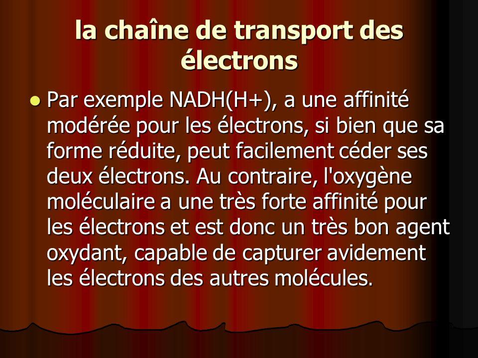 la chaîne de transport des électrons Par exemple NADH(H+), a une affinité modérée pour les électrons, si bien que sa forme réduite, peut facilement cé