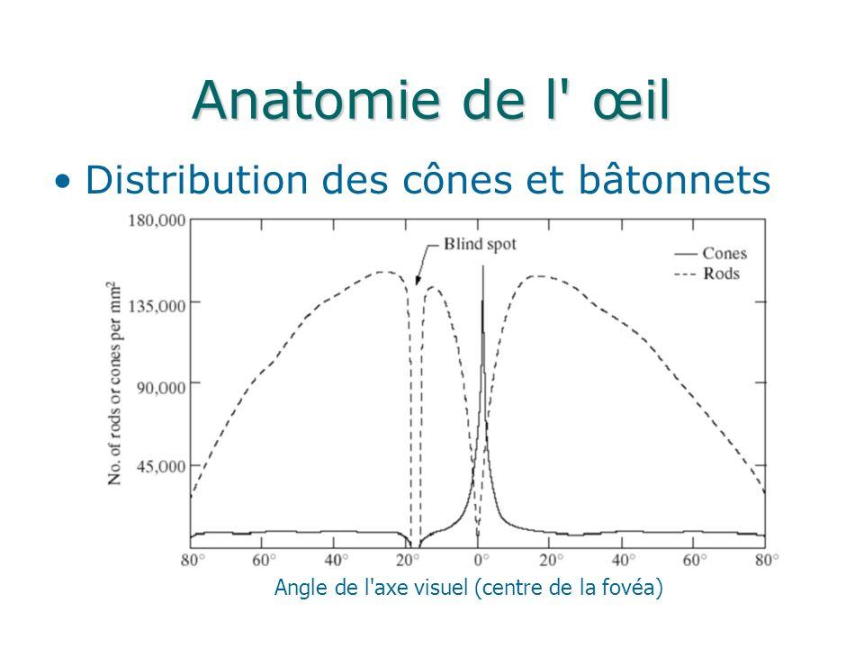 Anatomie de l œil Distribution des cônes et bâtonnets Angle de l axe visuel (centre de la fovéa)
