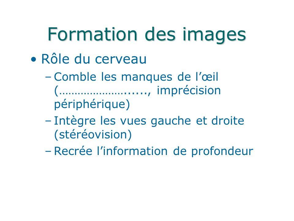 Formation des images Rôle du cerveau –Comble les manques de lœil (…………………......, imprécision périphérique) –Intègre les vues gauche et droite (stéréovision) –Recrée linformation de profondeur