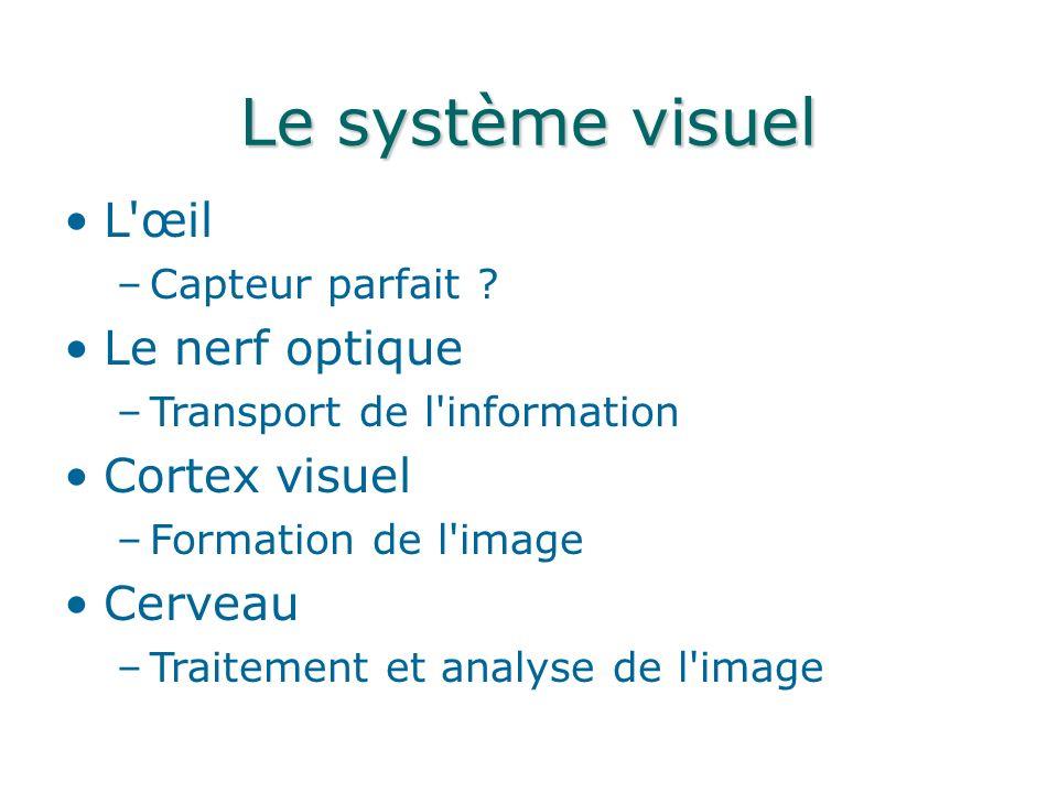 Le système visuel L œil –Capteur parfait .