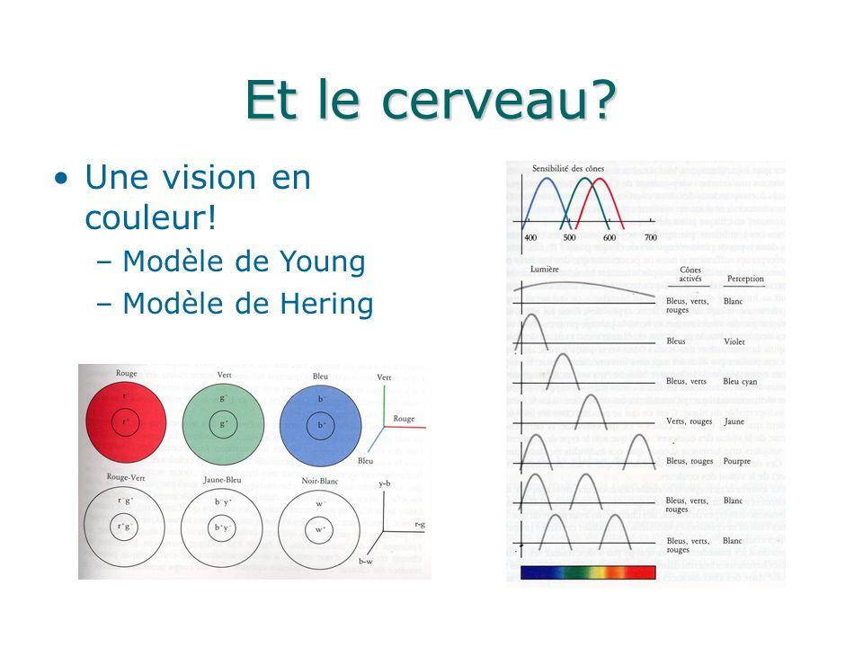 Et le cerveau? Une vision en couleur! –Modèle de Young –Modèle de Hering