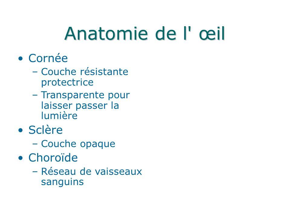 Anatomie de l œil Cornée –Couche résistante protectrice –Transparente pour laisser passer la lumière Sclère –Couche opaque Choroïde –Réseau de vaisseaux sanguins