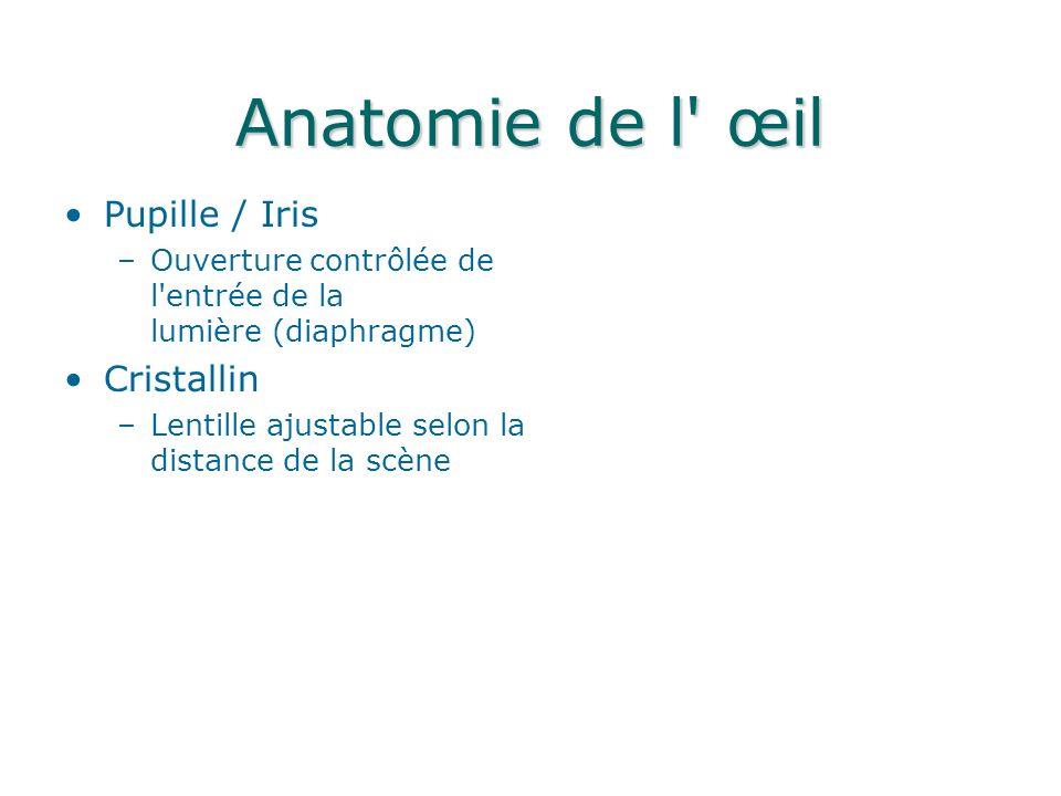Anatomie de l œil Pupille / Iris –Ouverture contrôlée de l entrée de la lumière (diaphragme) Cristallin –Lentille ajustable selon la distance de la scène