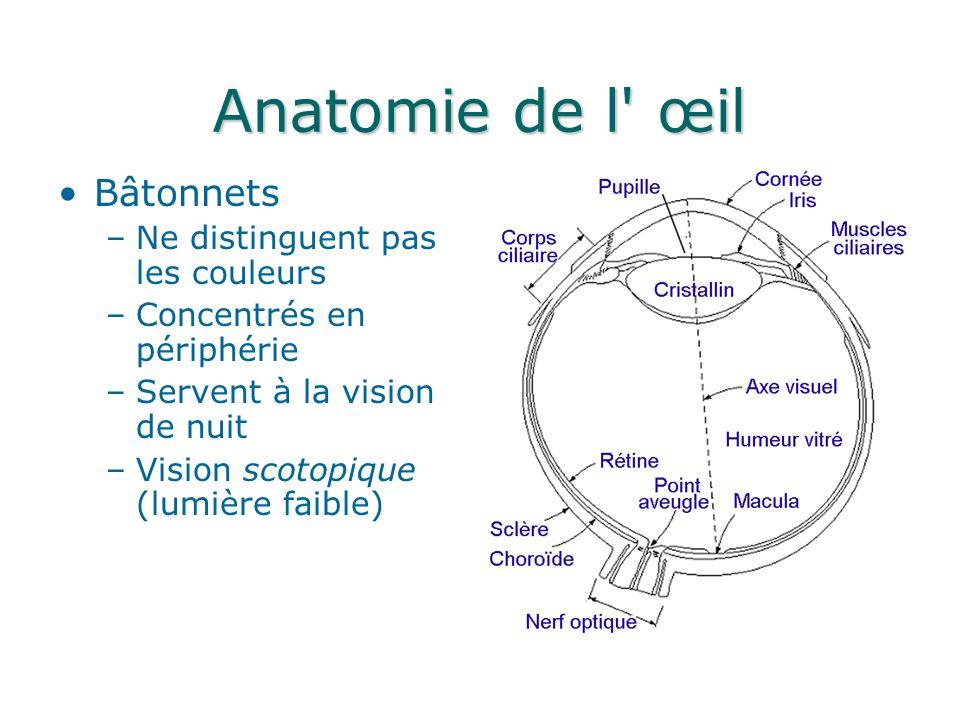 Anatomie de l œil Fovéa ~ 1.5mm*1.5mm –~150 000 cônes par mm 2 –~337 000 cônes dans la fovéa Capteur CCD .