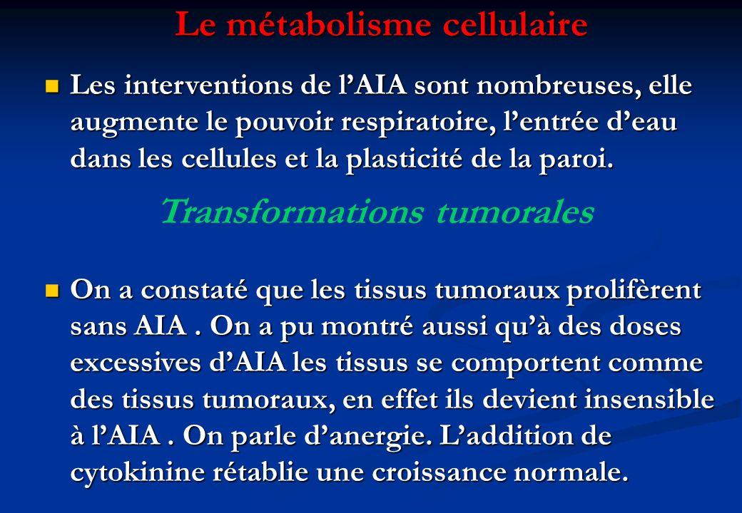 Le métabolisme cellulaire Les interventions de lAIA sont nombreuses, elle augmente le pouvoir respiratoire, lentrée deau dans les cellules et la plast