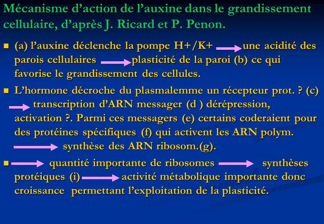 Mécanisme daction de lauxine dans le grandissement cellulaire, daprès J. Ricard et P. Penon. (a) lauxine déclenche la pompe H+/K+ une acidité des paro