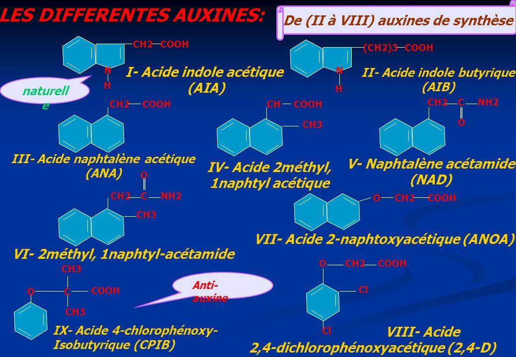 N H CH2 COOH CH2 C NH2 O CH3 I- Acide indole acétique (AIA) (CH2)3 COOH N H CH COOH CH2 C NH2 O CH3 OC COOH O CH2 COOH O Cl VIII- Acide 2,4-dichloroph