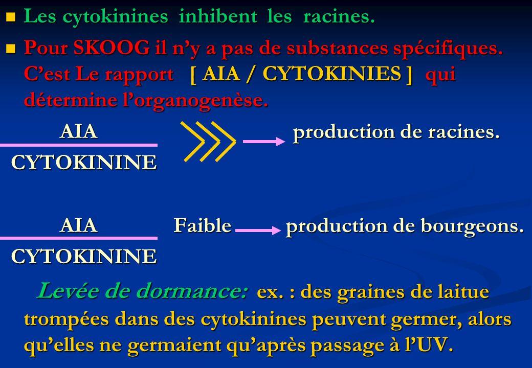 Les cytokinines inhibent les racines. Les cytokinines inhibent les racines. Pour SKOOG il ny a pas de substances spécifiques. Cest Le rapport [ AIA /