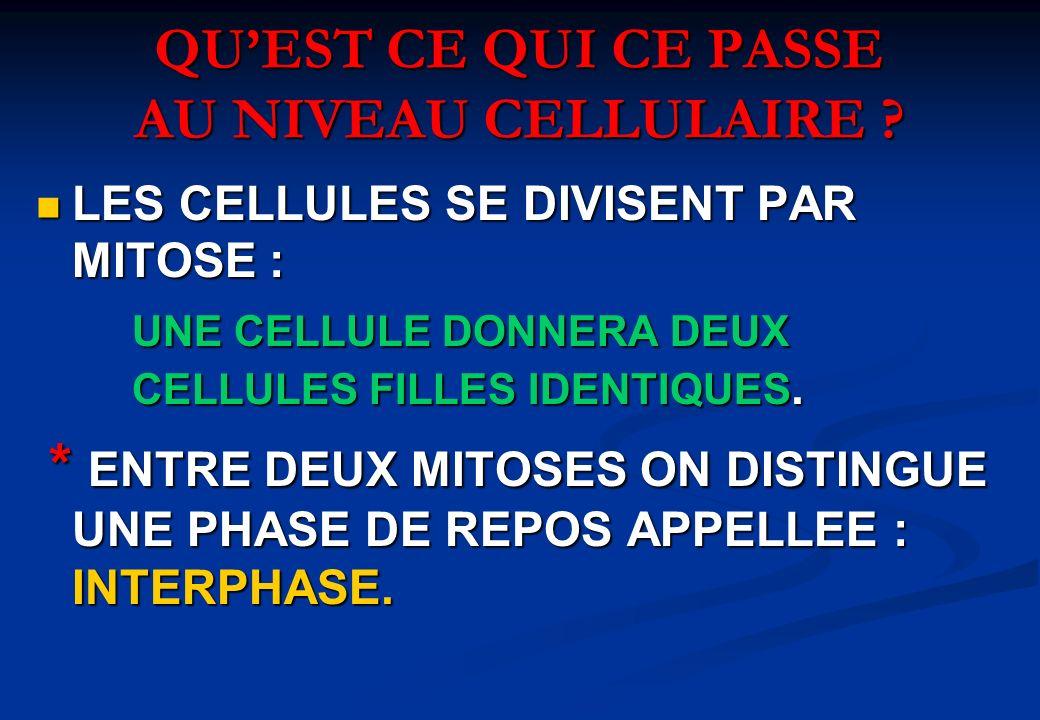 QUEST CE QUI CE PASSE AU NIVEAU CELLULAIRE ? LES CELLULES SE DIVISENT PAR MITOSE : LES CELLULES SE DIVISENT PAR MITOSE : UNE CELLULE DONNERA DEUX CELL