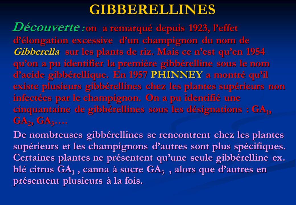 GIBBERELLINES Découverte : on a remarqué depuis 1923, leffet délongation excessive dun champignon du nom de Gibberella sur les plants de riz. Mais ce