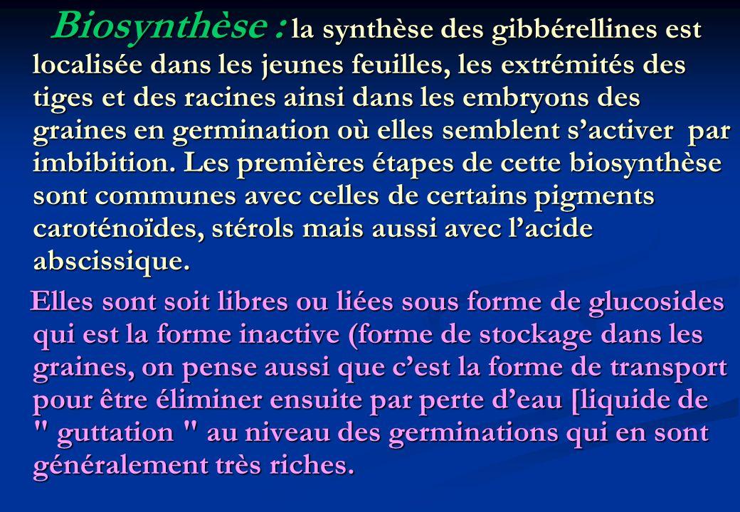 Biosynthèse : la synthèse des gibbérellines est localisée dans les jeunes feuilles, les extrémités des tiges et des racines ainsi dans les embryons de