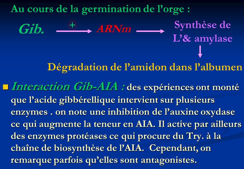 Interaction Gib-AIA : des expériences ont monté que lacide gibbérellique intervient sur plusieurs enzymes. on note une inhibition de lauxine oxydase c
