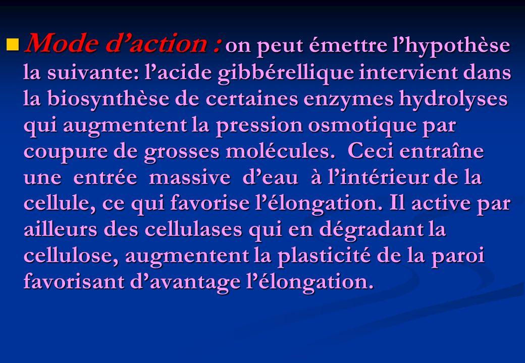 Mode daction : on peut émettre lhypothèse la suivante: lacide gibbérellique intervient dans la biosynthèse de certaines enzymes hydrolyses qui augment